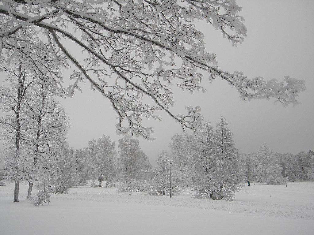 File:Silvered frosty trees in winter wonderland Helsinki 5 ...