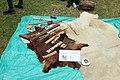 Site préhistorique d'Etiolles le 20 juin 2015 - 112.jpg