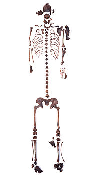 Skeleton of the Girl of the Uchter Moor