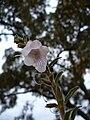 Smallflower8.jpg