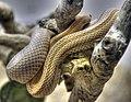 Snake (7762813992).jpg