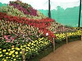 Snap from Lalbagh Flower Show Aug 2013 8404.JPG