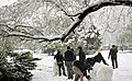 Snowy day of Tehran - 7 March 2013 19.jpg