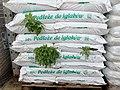 Soil for conifers 2019-09-29 4641.jpg