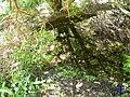 Sombras de troncos - panoramio.jpg