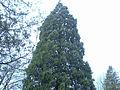 Some tree.jpg