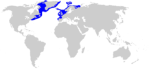 Range of the Greenland shark