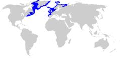 Distribución del tiburón de Groenlandia