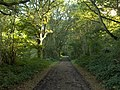 Southern Copse - geograph.org.uk - 248842.jpg