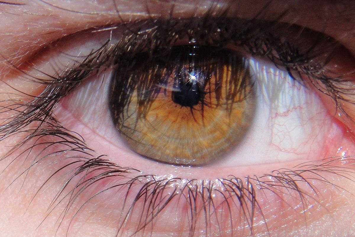 ela göz