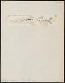Sphyraena vulgaris - 1700-1880 - Print - Iconographia Zoologica - Special Collections University of Amsterdam - UBA01 IZ13400141.tif