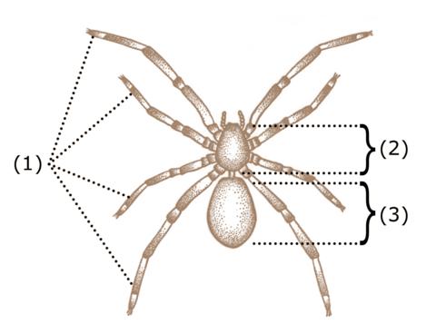 Cum se joacă păianjen solitaire