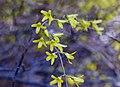 Spring Flowers (471759508).jpg