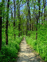 Spring in Voznesensk forests.JPG