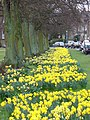 Spring in West Park - geograph.org.uk - 748057.jpg