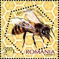 Stamps of Romania, 2010-03.jpg