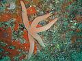 Starfish at Hard Rock dsc03947.jpg