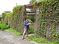 Starr-110307-2500-Thunbergia alata-climbing walls of structure with Kim-Kula Botanical Garden-Maui (24782584950).jpg