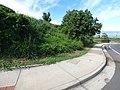 Starr-151019-0292-Cordia subcordata-habit-Pukalani-Maui (26215954391).jpg