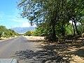 Starr 050618-2524 Casuarina equisetifolia.jpg