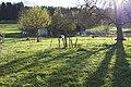 Steckborn - panoramio (39).jpg