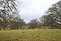 Stock Gaylard Park - geograph.org.uk - 642170.jpg