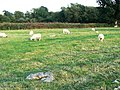 Stone circle, Day House Lane, Swindon, Wiltshire - geograph.org.uk - 252504.jpg