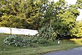 Storm Damage Montgomery County Maryland June 29 2012 (7473948062).jpg