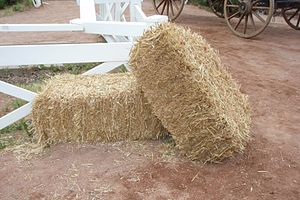 Decorative straw bales at the Calgary Stampede.