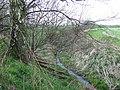 Stream, near Pillaton, Staffordshire - geograph.org.uk - 398234.jpg