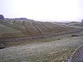 Stripy field - geograph.org.uk - 116055.jpg