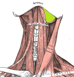 fascial spaces of head and neck pdf