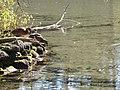 Sulphur Springs Conservation Area (43759442585).jpg