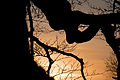 Sunset in Wolfheze (4320550676) (2).jpg