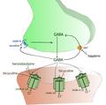 Synapse GABAergique.png
