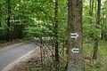 Szlak zielony Gleboczek Lopuchowo, Puszcza Zielonka (2).JPG