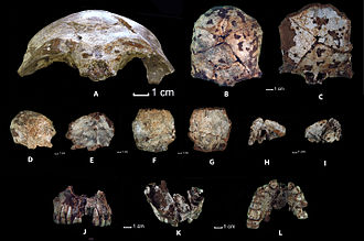 History of Laos - Ancient human fossil remains from Tam Pa Ling cave