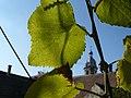 Tarnaveni - harvest - contrast - panoramio.jpg