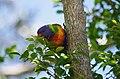 Taronga zoo, Sydney, Australia (15235897174).jpg