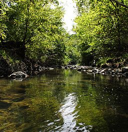 Taylor-Massey Creek.jpg