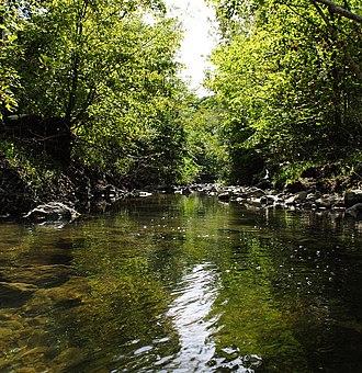 Taylor-Massey Creek - Taylor-Massey Creek in Warden Woods Park, Scarborough