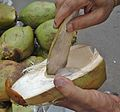 Tender coconut.jpg