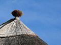 Thatched roofs z01.jpg
