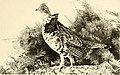 The China or Denny pheasant in Oregon, with notes on the native grouse of the Pacific Northwest (1908) (14561979569).jpg