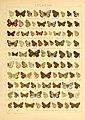 The Macrolepidoptera of the world (Taf. 79) (8145271295).jpg
