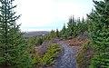 The Path (4269643270).jpg