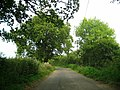 The lane between Clarkham Cross and Closworth - geograph.org.uk - 1496003.jpg
