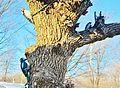 Three is a crowd... - Se partager un arbre... - panoramio.jpg