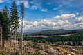 Tillamook forest.jpg