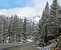 Tioga Pass Road, Yosemite 5-20-15 (18347300409).jpg